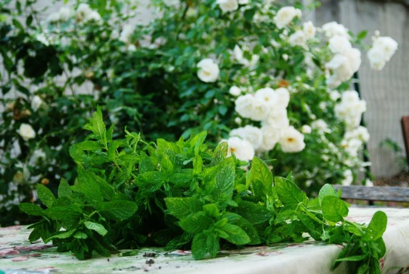 menta e rose bianche