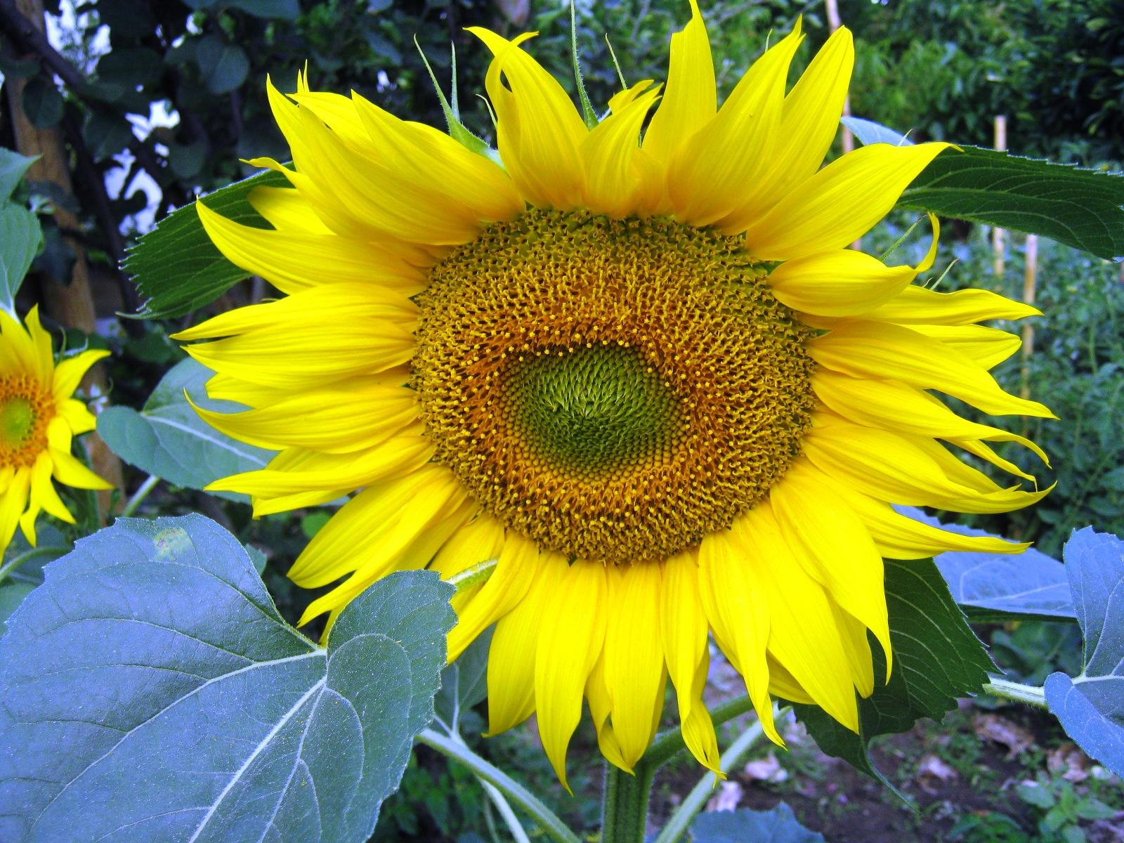 meu quintal meu jardim : MEUS CAMINHOS RIBATEJO: FOTOS RIBATEJO, MINHA CASINHA, MEU ...