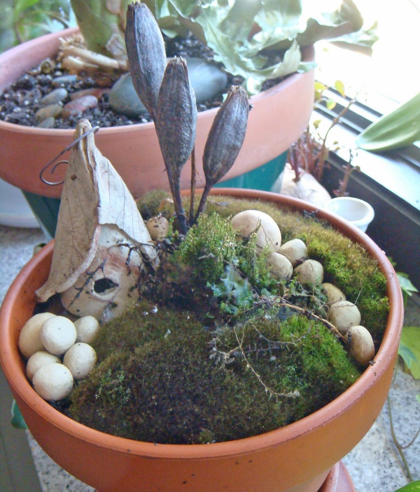 ... miniature moss garden lives under a glass cloche. Under the glass, it