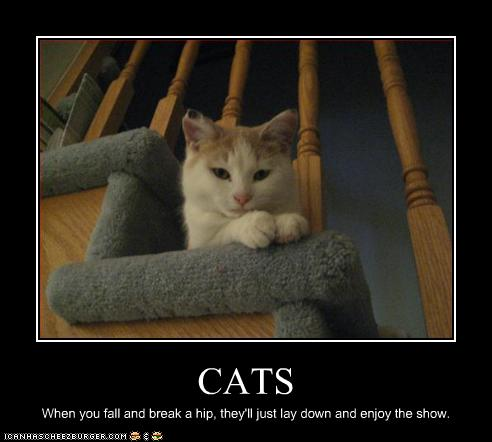 Funny Inspirational Cat Posters