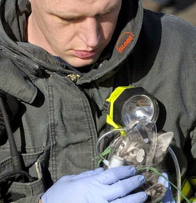 People doing amazing things for animals (28 pics), firefighter rescued a kitten