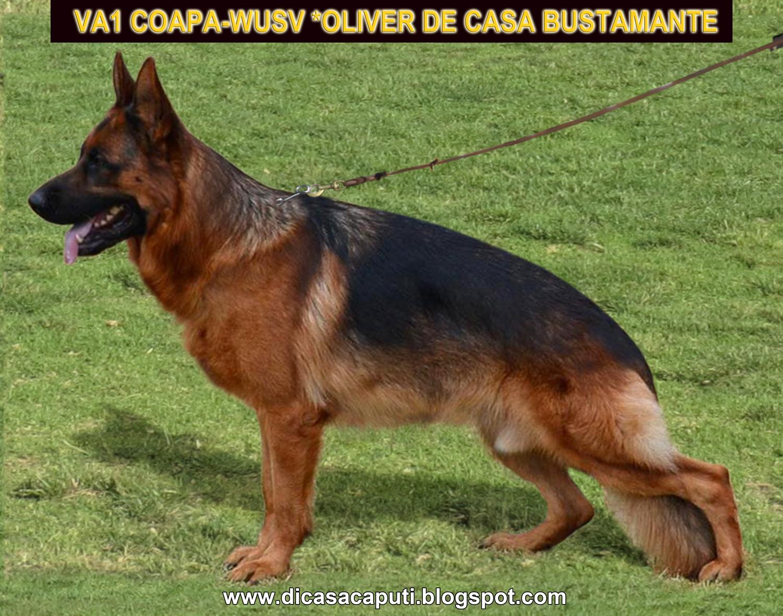 VA1 *XARO DI CASA CAPUTI: 2012