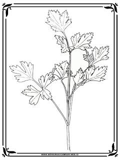 belajar mewarnai gambar pohon seledri
