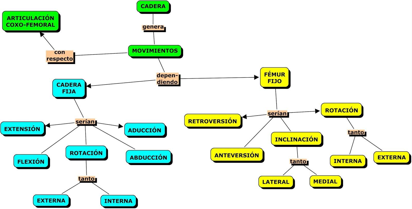MAPAS CONCEPTUALES ANATOMÍA CADERA | MAPAS CONCEPTUALES (MIND MAPS ...