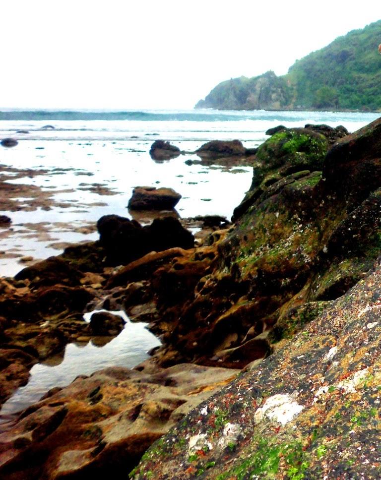 Batuan karang yang tampak akibat surutnya air laut