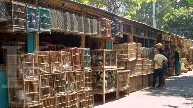 Pasar Burung Malang Adi Jaya Bird Seputar Burung