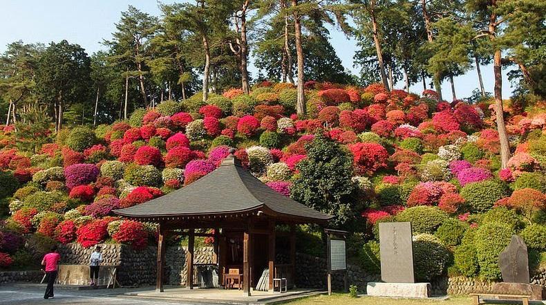 Las Azaleas del Templo Budista Shiofune Kannon-ji