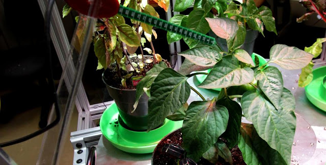 A robotic probe in the University of Colorado's Robotic Gardening System can check the soil to determine the moisture content and then can add water and nutrients as needed. Image Credit: NASA/Jim Grossmann