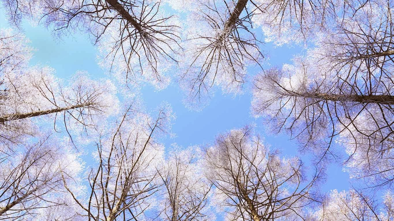 Rimed larch forest and sky, Nagano Prefecture, Japan (© SHOSEI/Aflo/Getty Images) 313