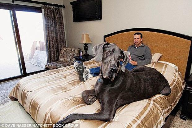 Muere el perro mas grande del mundo