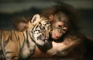 Animal-Couple-Photos-Pictures-Images-Pics