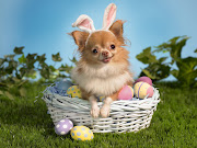 Easter Wallpapers bunny wishes happy easter wallpaper