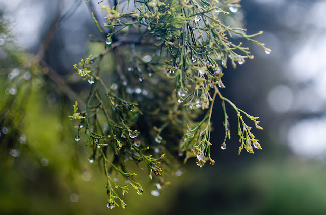 water droplets on tree