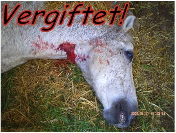 http://2.bp.blogspot.com/-72PbIPqBEtA/UrHld2jvIfI/AAAAAAAAAs0/rcNwOmrlP60/s1600/tiger+vergiftet.jpg
