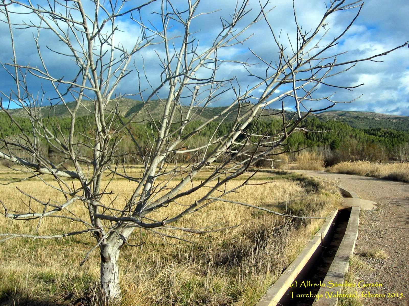 torrebaja-valencia-noguera-camino