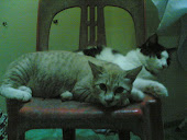 Hasyumi and Hasyiyo