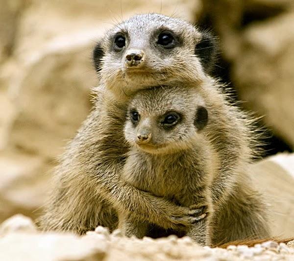 Взгляни вокруг мир животных