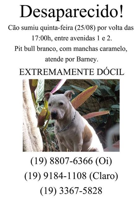 PIT BULL BARNEY continua PERDIDO nas imediações da UNICAMP em CAMPINAS (SP) Barney