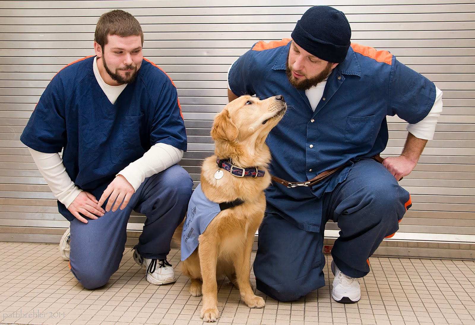 Two men dressed in blue shirts and blue pants are kneeling on one knee in front of a steel wall. An older golden retriever puppy is sitting between them wearing a baby blue jacket. The pup is looking up to the man on the right (who is wearing a blud knit cap). That man is looking back at the pup. The man on the left is also looking at the pup and not the camers.