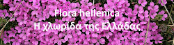 Flora hellenica