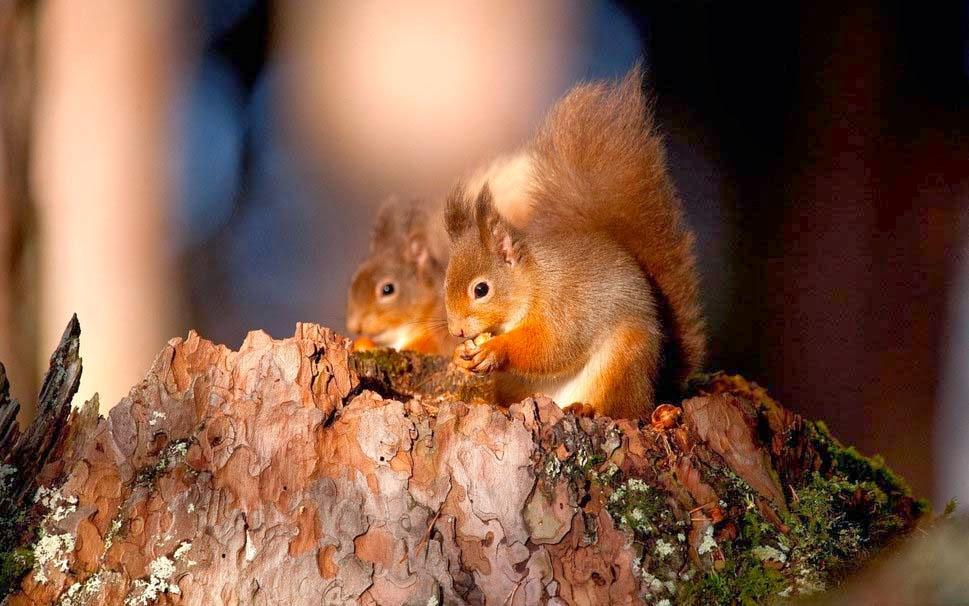 cute-little-squirrels-kittens