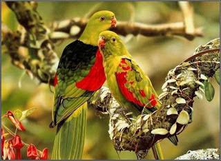 hình ảnh dễ thương của các loài chim