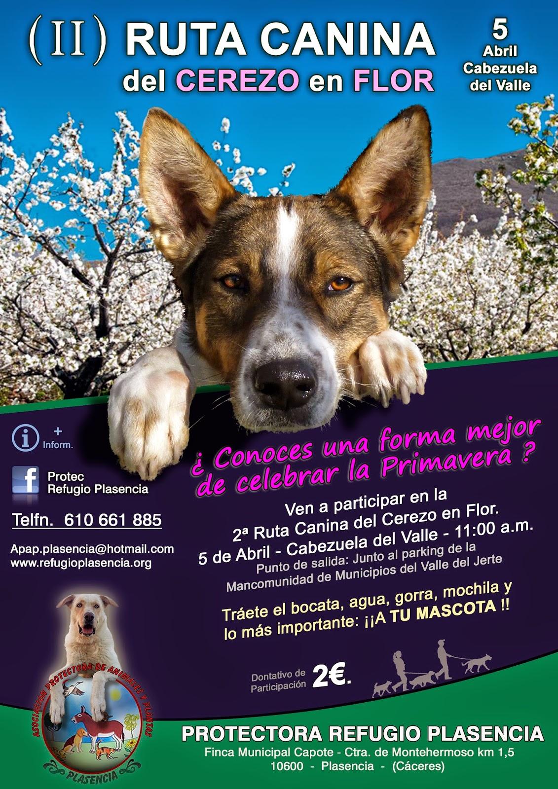 Ruta canina del Cerezo en Flor. Valle del Jerte.
