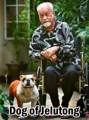 karpal-dog-of-jelutong