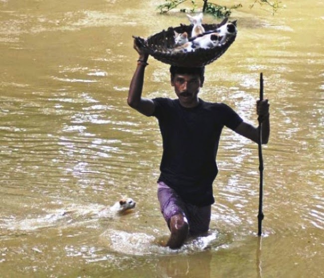 #18. A man in Cuttack City, India put some stranded kittens into a basket and carried them across flooded water to dry land. - 24 Happy Animal Photos Made Possible By The People Who Saved Them.