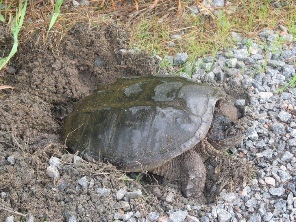 Turtle Beach Lmk
