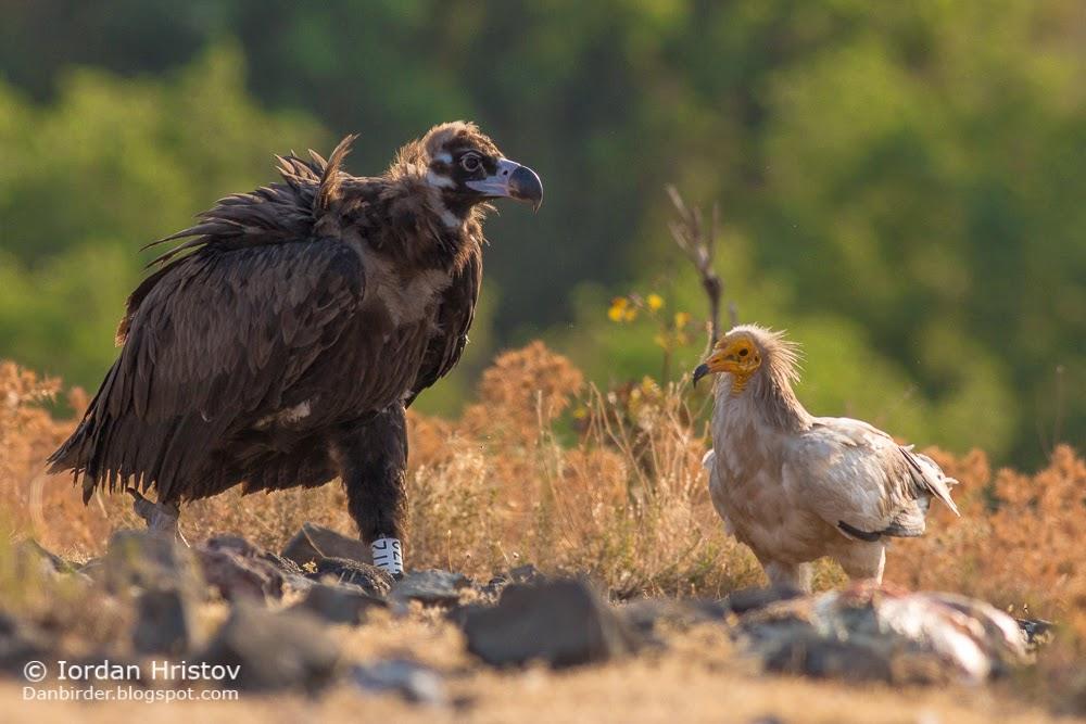 bird photography workshops