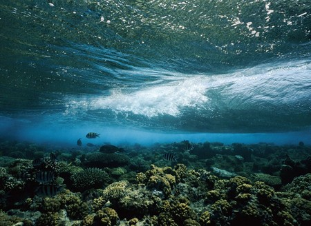 importance of coral reefs and mangroves importance of