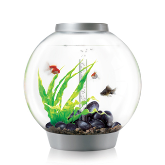 biorb aquarium tagebuch designer aquarium f r tierqu ler teil 1. Black Bedroom Furniture Sets. Home Design Ideas