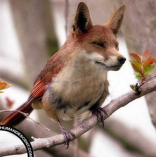 20-Foxird-Martin-Humandescent-Surreal-Animal-Mashup-www-designstack-co