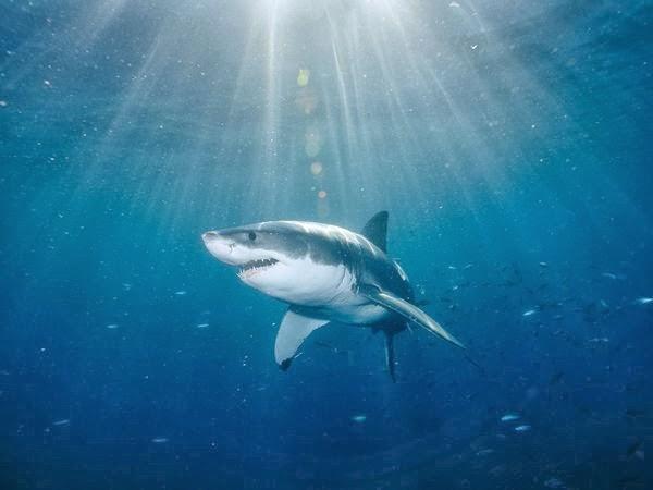 2560x1600 ocean sharks - photo #34