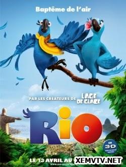 Vẹt Đuôi Dài Rio - Rio