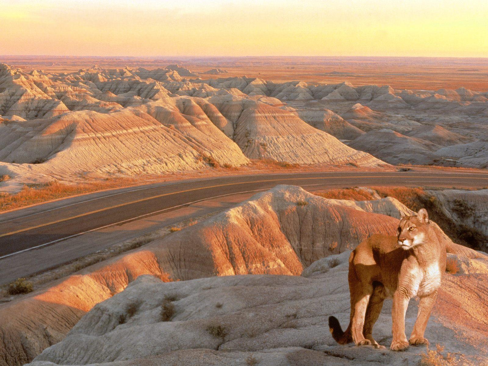 http://2.bp.blogspot.com/-76ESZw5oMZc/T3yc-cSeKYI/AAAAAAAAAjI/4LAcOQgJeg4/s1600/lion+on+road.jpg