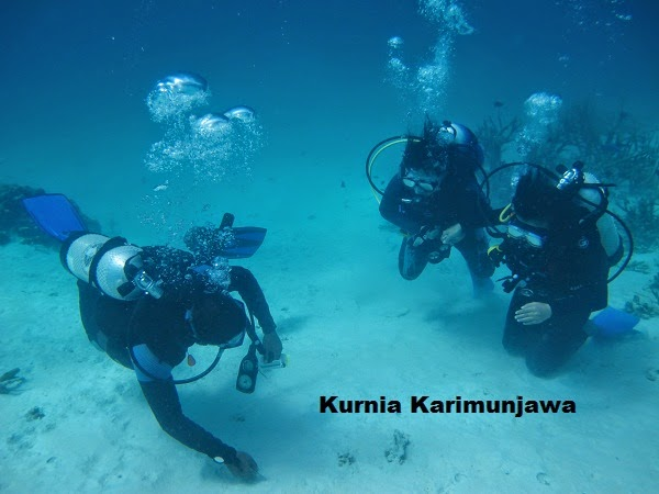 pemandu diving