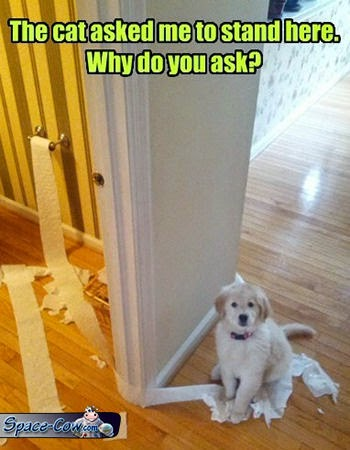 funny cute puppy picture