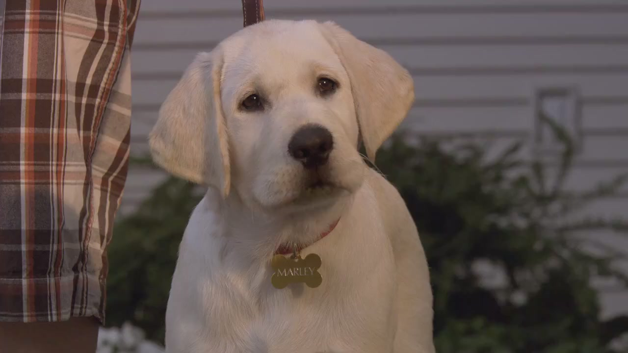 marley and me Marley and me is about a dog, definitely, but it's just as much about a man (john grogan, played by wilson), his wife (jenny, played by aniston), and his growing family.