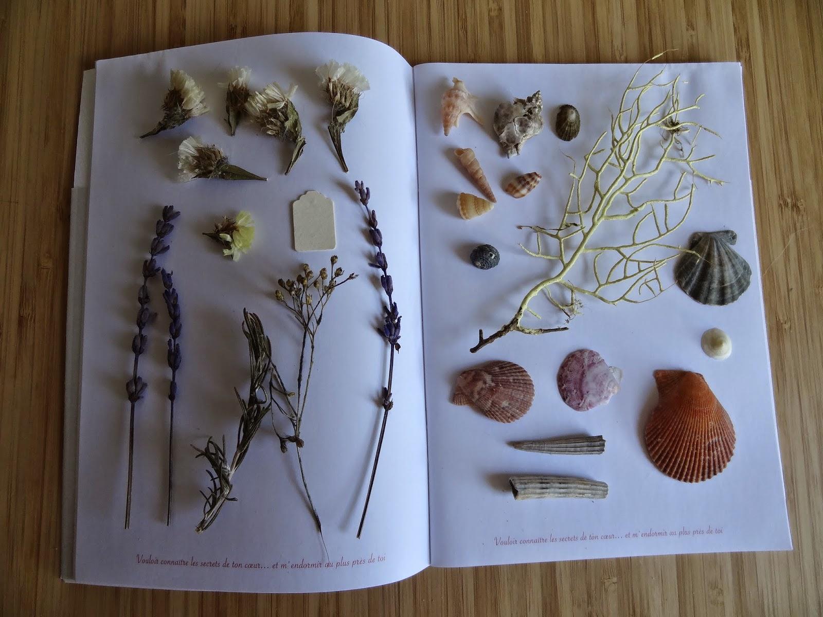 flowers shell