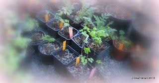 Frösådder, plantor