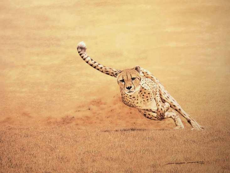 Cheetah Hewan Paling Cepat Di Darat
