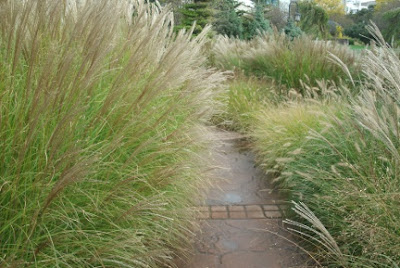 Ornamental grasses bordering path up Courante section of Toronto Music Garden by garden muses: a Toronto gardening blog