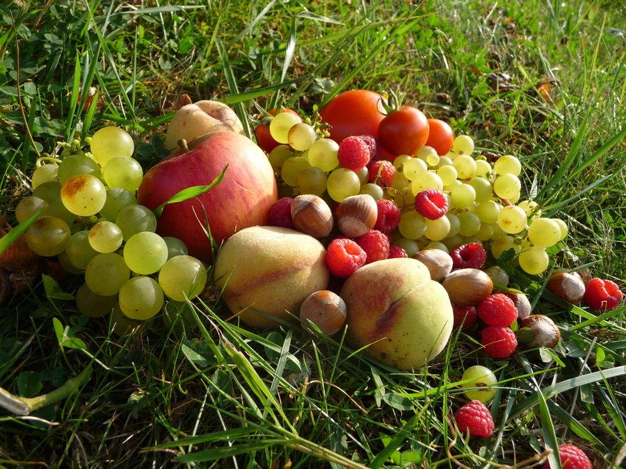 Fotos De Frutas En Movimiento