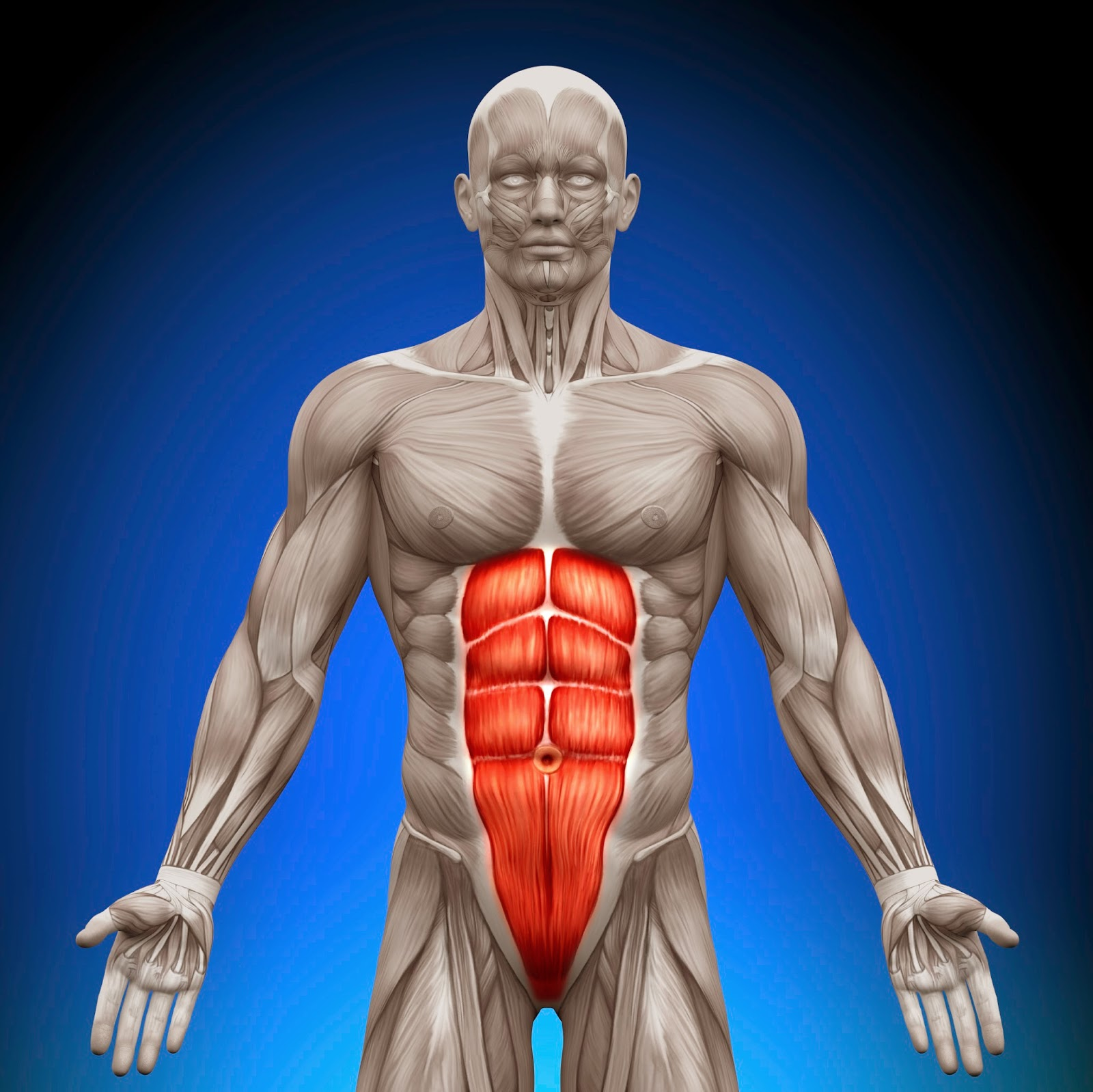 Body Facts The Abdominal Muscles And Their Function Fitness For