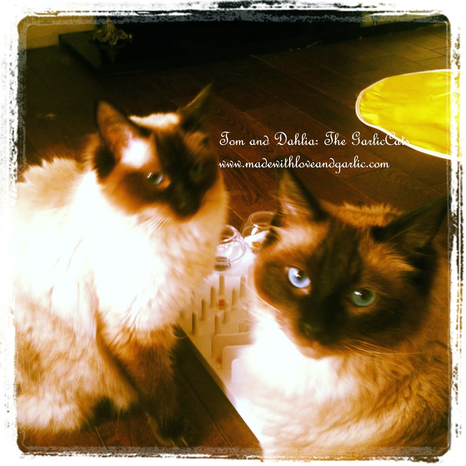 The GarlicCats: Tom and Dahlia