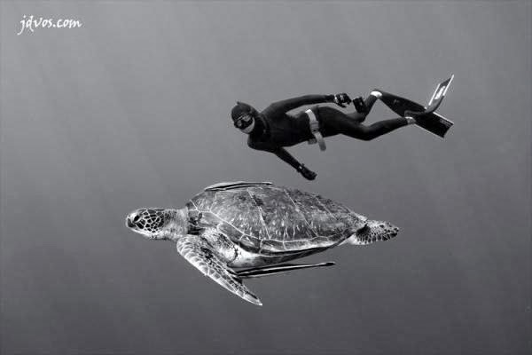 Underwater Photography by Jacques de Vos