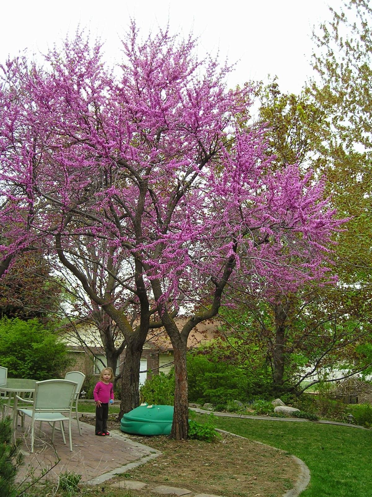 backyard trees for shade various design inspiration for backyard
