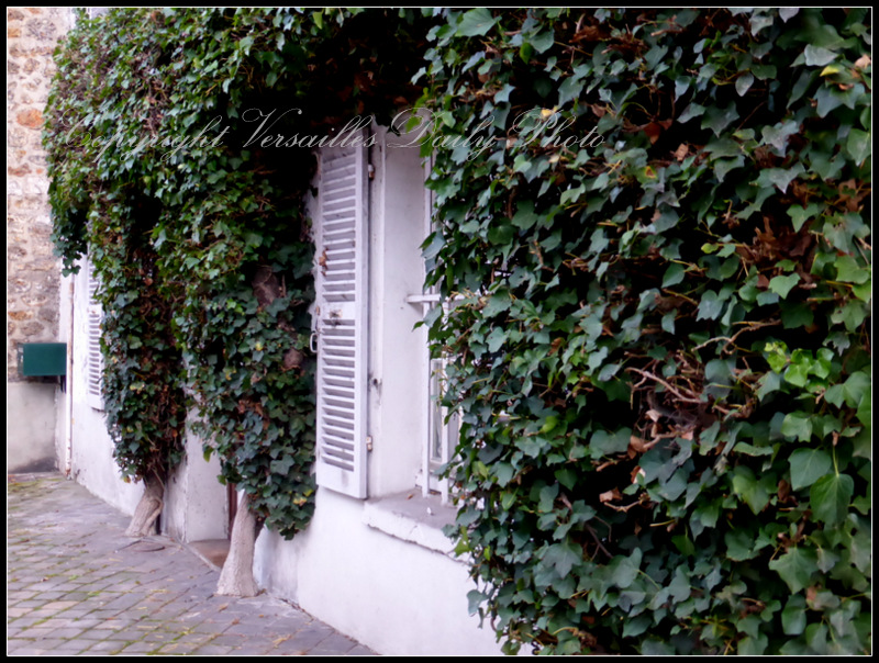 Ivy on house in Versailles lierre